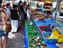 Na targu-sprzedaż ostryg i innych owoców morza