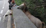 Dorota Włosek: 1000 km na piechotę. Z psem