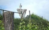 Winnica Jasiel. Wyprawa na czarodziejską górę