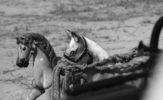 Dąbrówka: Zaginiony świat