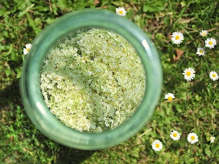 Przepis na nadbużański kwas z kwiatów czarnego bzu