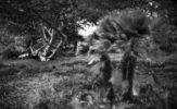 Bogdan Frymorgen: Drzewa umierają stojąc