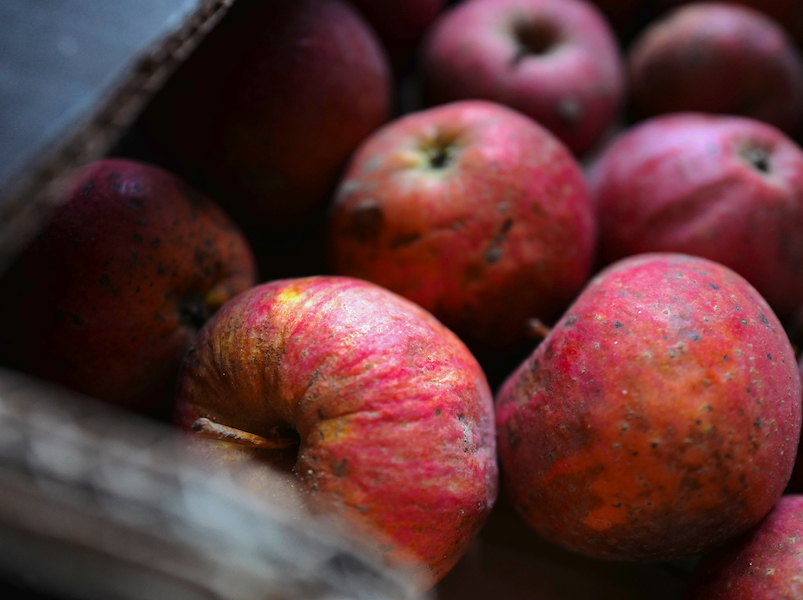 Jabłonie, racuszki i tarty